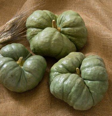 HEIRLOOM NON GMO Triamble Winter Squash/Pumpkin 15 seeds (Rare)