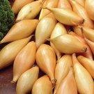 HEIRLOOM NON GMO Yellow Ambition Shallots 100 seeds