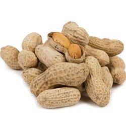 HEIRLOOM NON GMO Jumbo Virginia Peanuts 20 Seeds