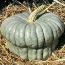 HEIRLOOM NON GMO Queensland Blue Winter Squash 15 seeds