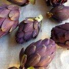 HEIRLOOM NON GMO Violetta Precoce Artichoke 25 seeds