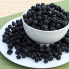 HEIRLOOM NON GMO Wild Blackberry 50 seeds