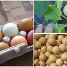HEIRLOOM NON GMO Easter Egg Gourd 25 seeds