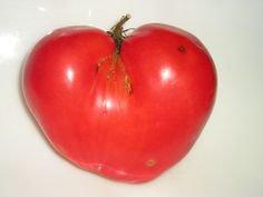 HEIRLOOM NON GMO Belarusian Heart Tomato 25 seeds