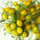 HEIRLOOM NON GMO Hssiao His Hung Shih Tomato 25 seeds