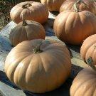 HEIRLOOM NON GMO Long Island Cheese Winter Squash/Pumpkin 15 seeds