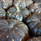 HEIRLOOM NON GMO Thai Rai Kaw Tok Pumpkin 15 seeds