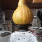 HEIRLOOM NON GMO Seminole Pumpkin 15 seeds