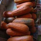 HEIRLOOM NON GMO Long Pie Pumpkin 15 seeds