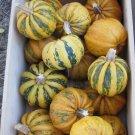 HEIRLOOM NON GMO Kamo Kamo Squash 15 seeds