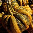 HEIRLOOM NON GMO Tonda Pumpkin/Winter Squash 15 seeds