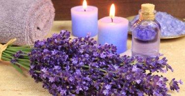 HEIRLOOM NON GMO Vera Lavender 50 seeds