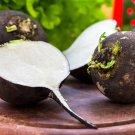 HEIRLOOM NON GMO Giant Black Radish 50 Seeds