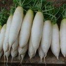 HEIRLOOM NON GMO Chinese White Winter Radish50 Seeds