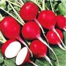 HEIRLOOM NON GMO Giant of Sicily Radish 50 Seeds