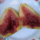 HEIRLOOM NON GMO Greek Honey Fig Tree 10 Seeds