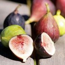 HEIRLOOM NON GMO Jerusalem Dwarf fig Tree 10 Seeds