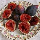 HEIRLOOM NON GMO Brown Turkish Fig 10 Seeds