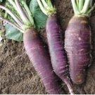HEIRLOOM NON GMOViolet De Gournay Radish 200 Seeds