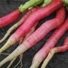HEIRLOOM NON GMO Candela Di Fuoco Radish 200 Seeds
