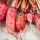 HEIRLOOM NON GMO Chinese Pink Radish 200 Seeds