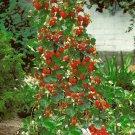 HEIRLOOM NON GMO Climbing Strawberry 25 seeds