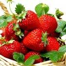 HEIRLOOM NON GMO Ozark Everbearing Strawberry 25 seeds