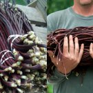 HEIRLOOM NON GMO Yard Long red Noodle Bean 10 seeds