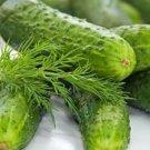 HEIRLOOM NON GMO Boston Pickling Cucumber 15 seeds