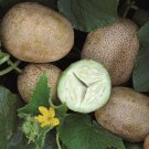 HEIRLOOM NON GMO Russian Netted Cucumber 15 seeds
