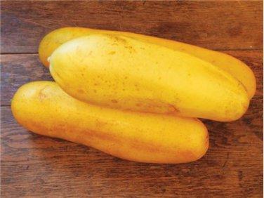HEIRLOOM NON GMO Jaune Dickfleischige Cucumber15 seeds