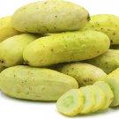HEIRLOOM NON GMO Solly Beiler Cucumber 15 seeds