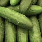 HEIRLOOM NON GMO Dar Cucumber 15 seeds