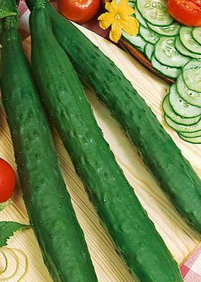HEIRLOOM NON GMO Long Green or London Long Cucumber 15 seeds