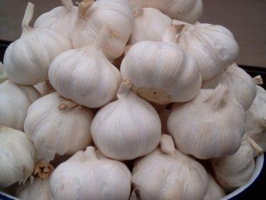 HEIRLOOM NON GMO Silver Rose Garlic 3 oz Cloves