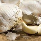 HEIRLOOM NON GMO Late Italian Garlic 3 oz Cloves