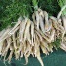 HEIRLOOM NON GMO Lunar White Carrot 50 seeds