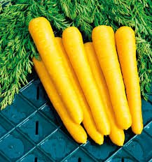 HEIRLOOM NON GMO Amarillo Yellow Carrot 50 seeds