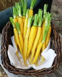 HEIRLOOM NON GMO Jaune Obtuse du Doubs Carrot 50 seeds