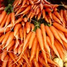 HEIRLOOM NON GMO Kyoto Red Carrot 50 seeds