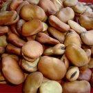 HEIRLOOM NON GMO Broad Windsor Fava Bean 25 seeds
