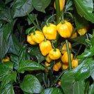 HEIRLOOM NON GMO Big Sun Yellow Habanero Pepper 25 seeds