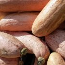 HEIRLOOM NON GMO Pink Banana Squash 15 seeds
