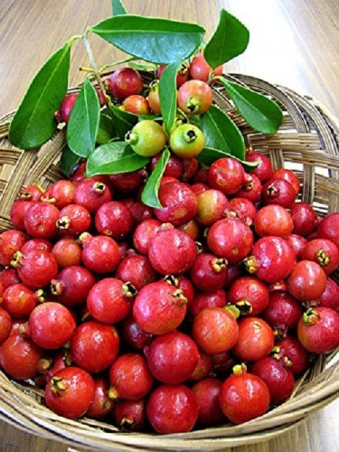HEIRLOOM NON GMO Strawberry Guava 10 seeds