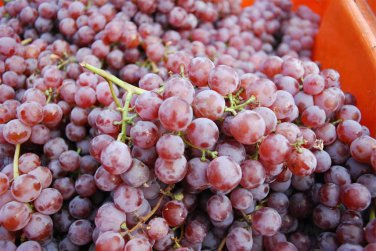 HEIRLOOM NON GMO Candace Red Grape 10 seeds