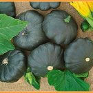 HEIRLOOM NON GMO Gagat Patisson Squash 15 seeds
