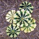 HEIRLOOM NON GMO Patisson Panache Blanc Et Vert Scallop Squash 15 seeds