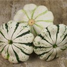 HEIRLOOM NON GMO Patisson Panache Jaune Et Vert Scallop Squash 15 seeds