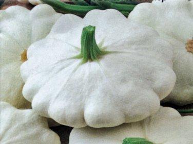 HEIRLOOM NON GMO White Scallop Squash 15 seeds
