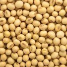 HEIRLOOM NON GMO Envy Soya Bean 25 seeds